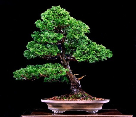 1st American Bonsai Exhibition In Rochester Ny