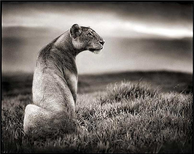 I came accross a beautiful black and white portfolio by the english photographer nick brandt