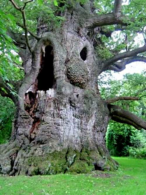 http://inspiringnews.files.wordpress.com/2010/05/old-tree.jpg