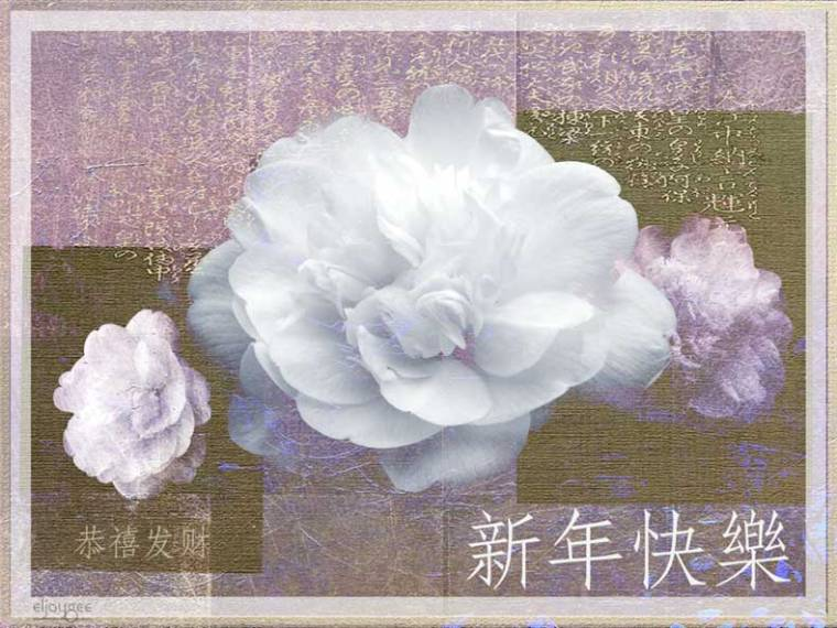 camellias_new_year_card2